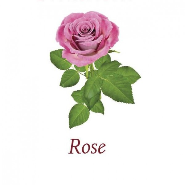 Scented-Cubes-Rose