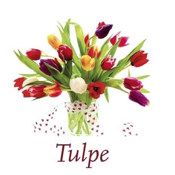 Scented Cubes - Tulpe