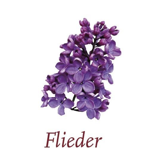 Scented Cubes - Flieder